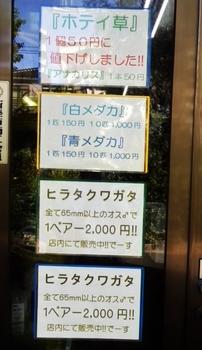 ヒラタクワガタ5.JPG